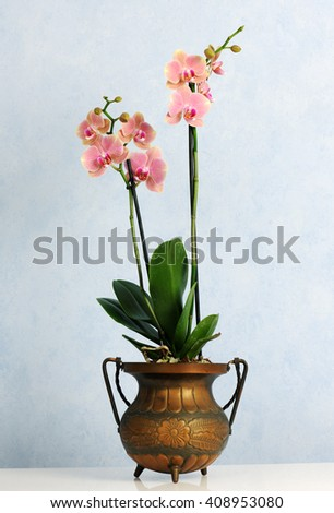 pot with pink orchid - stock photo