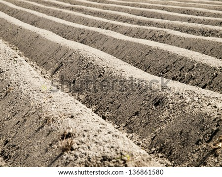 potato field at an early stage