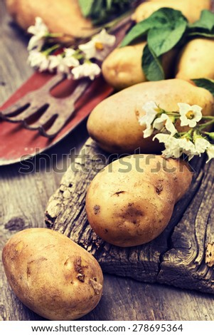 potato with leaves and flowers on a wooden background in rustic style. harvest potatoes (toning) - stock photo