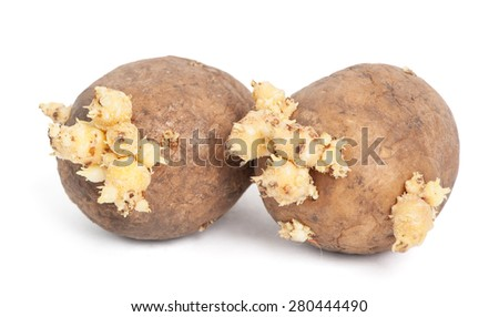 Potatoes with sprouts isolated on white background - stock photo