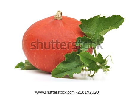 potimarron with its foliage isolated on white background - stock photo