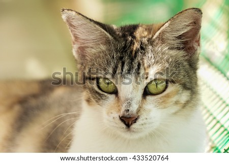Potrait of village cat
