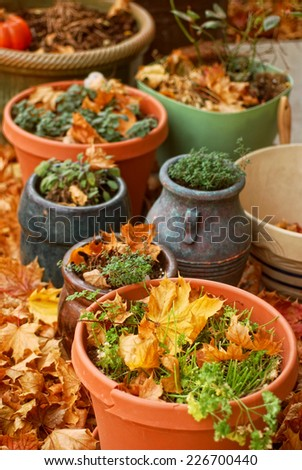 Pots of harvested herbs surrounded by autumn leaves - stock photo