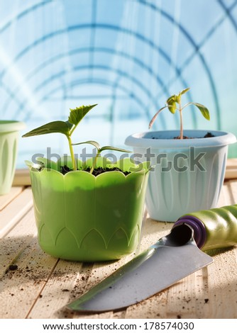 Pots of seedlings in greenhouse - stock photo
