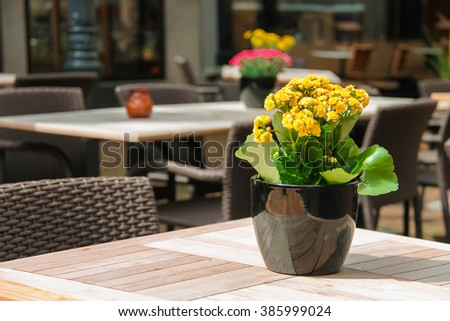 Pots with decorative flowers on the tables of outdoor street cafe