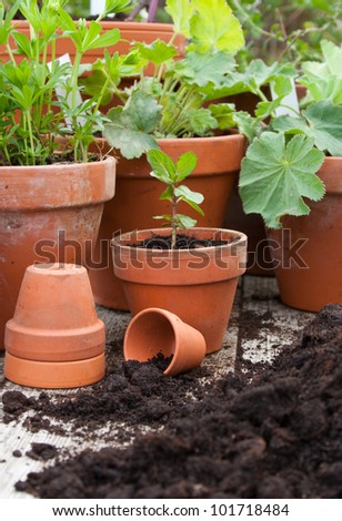 Pots with flowers/garden/planting - stock photo