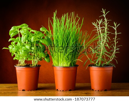 pots with fresh herbs, basil, rosemary and chives