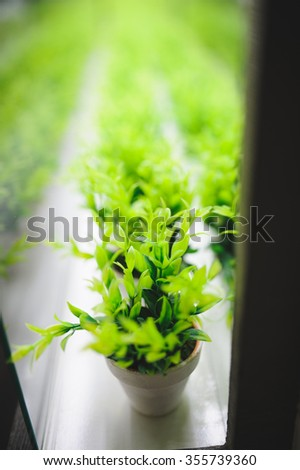 pots with green plants standing in line in box - stock photo