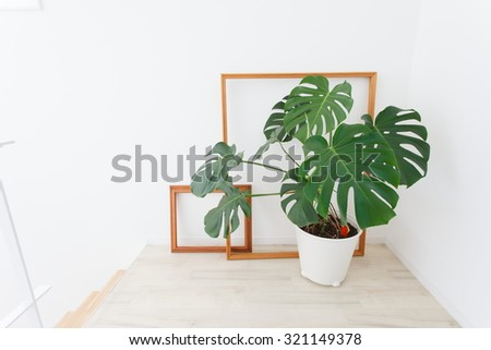 Potted and a frame that is placed in the room - stock photo
