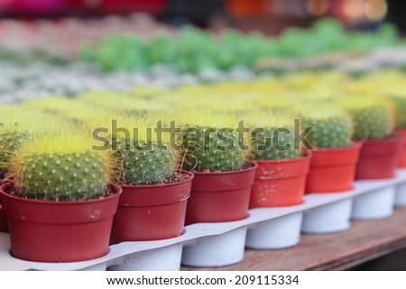 Potted cactus for sale.