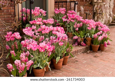 Potted Garden Spring Easter Tulips