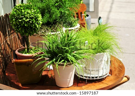 Potted green plants on wooden patio table