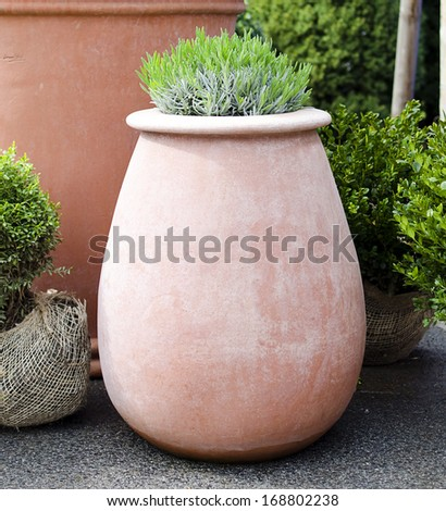 Potted herbs in patio garden  - stock photo