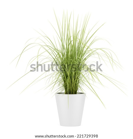 potted houseplant isolated on white background - stock photo