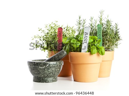 Potted Oregano, Basil and Rosemary with granite mortar and pestle