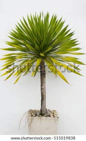 Potted plant isolated in white background