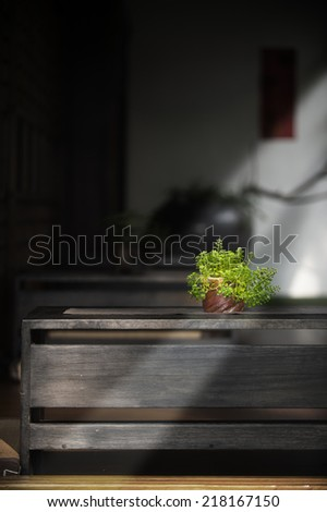 Potted plant on a table  - stock photo