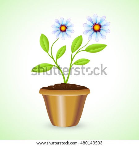 Potted Plant On White Background Shows Outdoor Houseplant And Botanic
