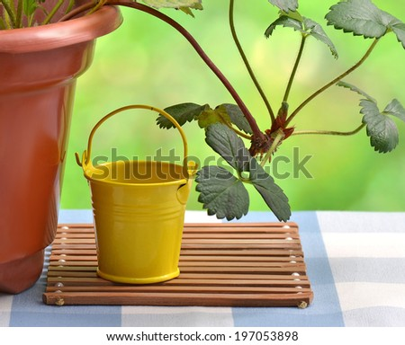 Potted plants and iron bucket in the garden  - stock photo
