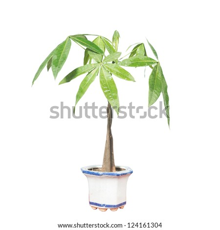 Potted plants isolated in white to the background