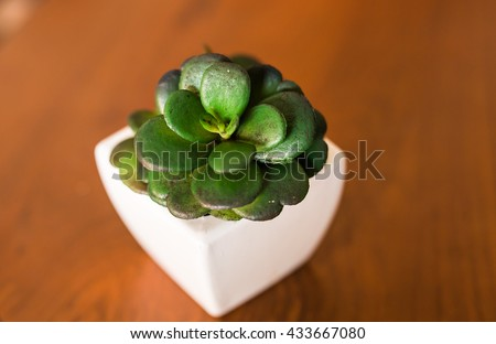 Potted plants on wooden table - stock photo