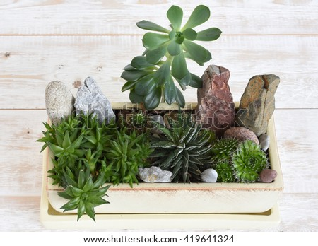 Potted plants. room flowers in a pot - stock photo