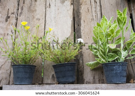 Potted plants with wood background