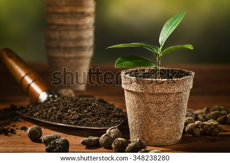 Potted seedling growing in biodegradable peat moss pots on wooden desk or table with copy space. Horizontal photo. - stock photo