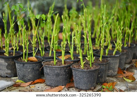 Potted seedlings growing - stock photo
