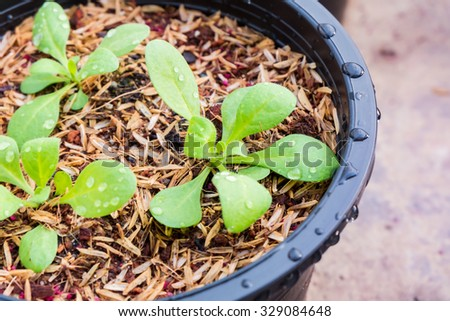 Potted seedlings growing. - stock photo