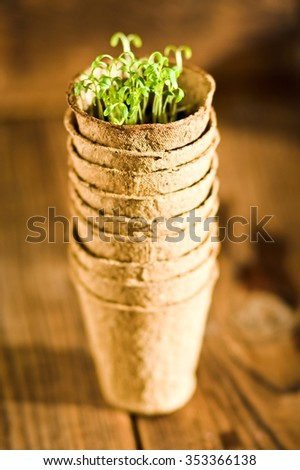 Potted seedlings growing in biodegradable peat moss pots. Selective focus - stock photo