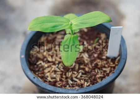 Potted seedlings growing in Nursery - stock photo