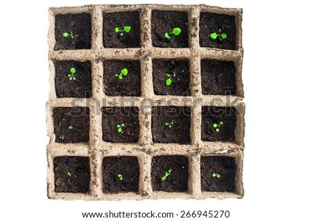 Potted seedlings growing in square organic pots isolated on white background - stock photo
