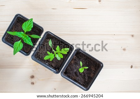 Potted seedlings growing in square plastic pots on wooden background with copy space - stock photo