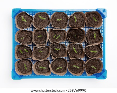 Potted Seedlings In The Seedling Tray From Above. Isolated On White Background. - stock photo