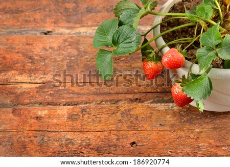 Potted strawberry on wooden background   - stock photo
