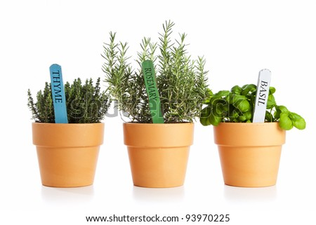 potted thyme, rosemary and basil isolated - stock photo