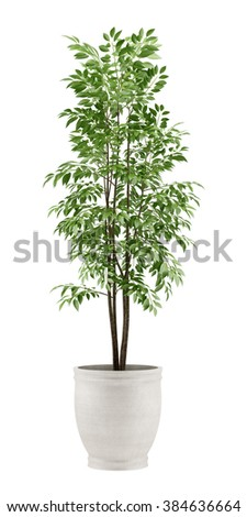 potted tree isolated on white background - stock photo