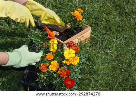 Potting flowers in the garden - stock photo