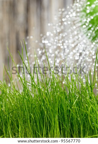 pouring from watering can on grass water - stock photo