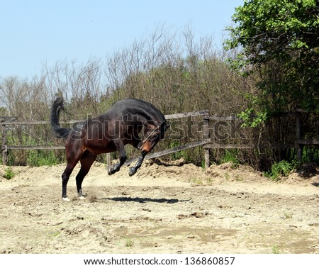 powerful horse running and jumping