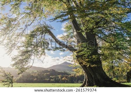 Powerscourt House and Gardens im morning -Wicklow, Dublin, Enniskerry, Ireland - stock photo