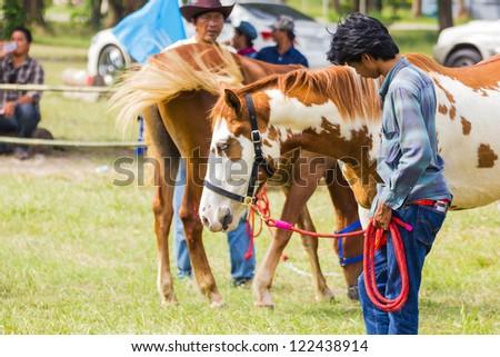 PRACHUAPKHIRIKHAN, THAILAND - DECEMBER 16 : An unidentified farmer displays his horse at the annual Livestock Show on December 16, 2012 in Pranburi, Prachuapkhirikhan, Thailand - stock photo