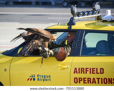 Bird Strike Stock Images Royalty Free Images Amp Vectors