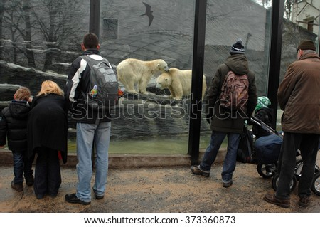 PRAGUE, CZECH REPUBLIC - FEBRUARY 18, 2012: A photograph of polar bears in their winter enclosure at the zoo in Prague, Czech Republic, Feb.18, 2012.