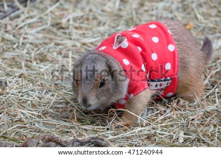 Prairie dog in red dot drees