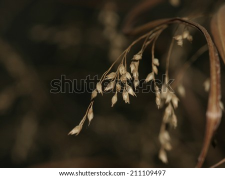 Prairie grass background with seed strand in foreground