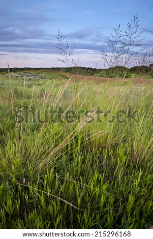 Prairie grasses at sunset, Blackwell Forest Preserve, DuPage County, Illinois. - stock photo