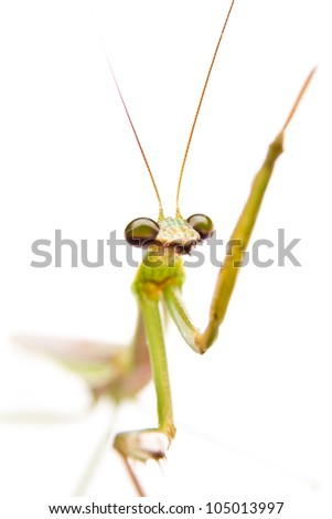 Praying Mantis isolated on white background