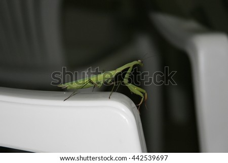 Praying mantis on a plastic chair